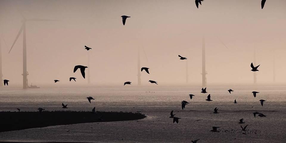 sinn86_IanForsythGettyImages_seabirdsmistwindturbines