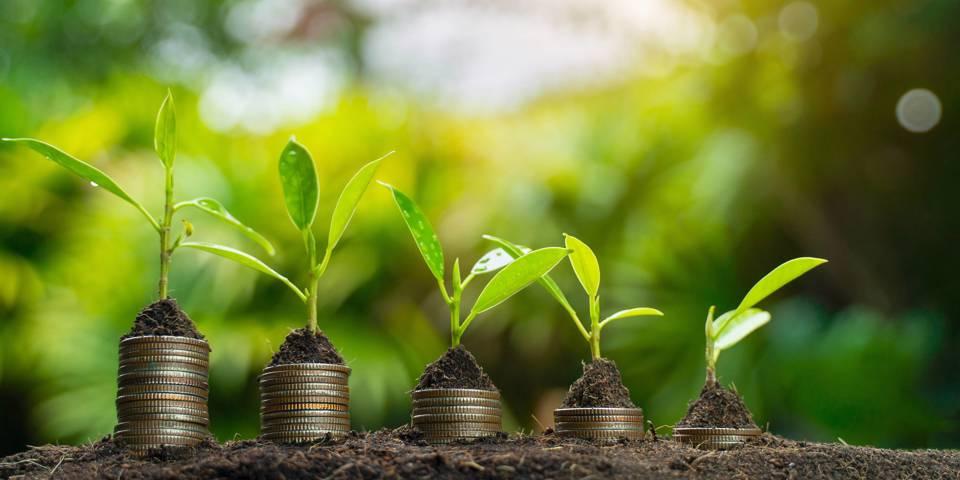 zahidi2_seksan MongkhonkhamsaoGetty Images_sustainabilitygrowthmoneyplant