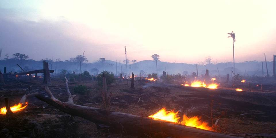 Amazon burning forest