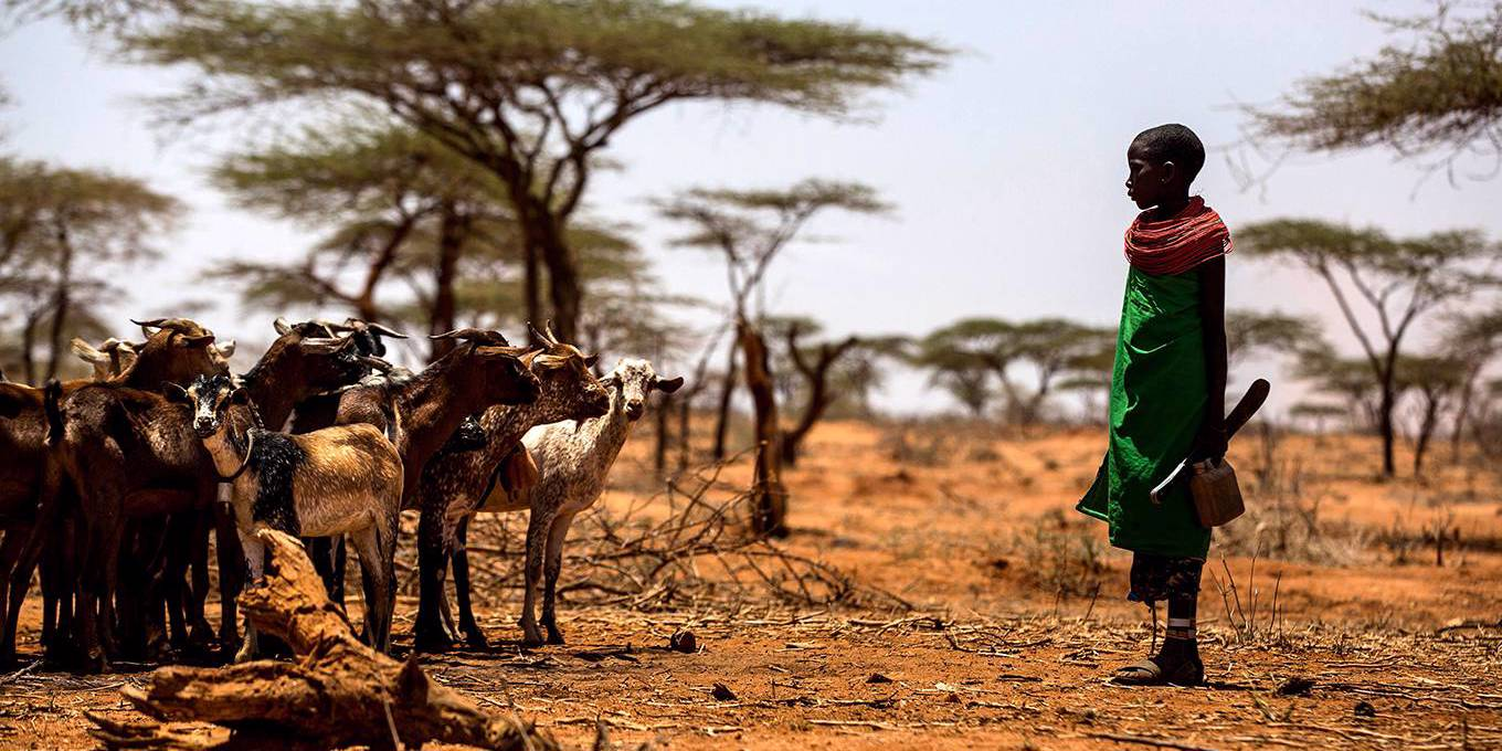 Goats Against Climate Change