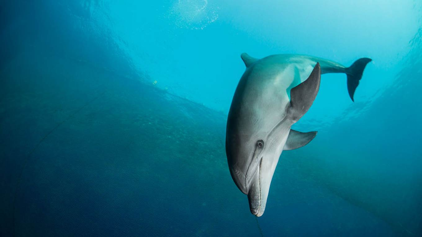 The Lethal Consequences of Misclassifying Dolphins | by Peter Singer