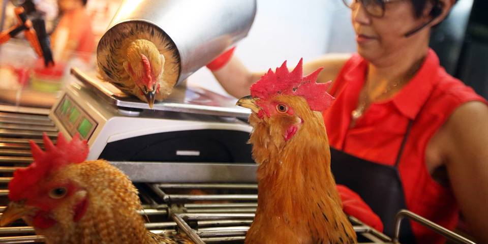 singer180_David WongSouth China Morning Post via Getty Images_chinawetmarketchickens
